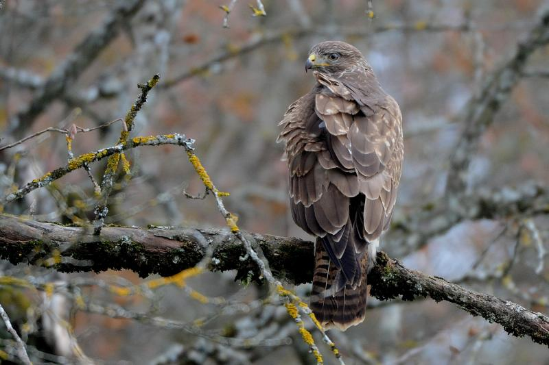 Buse variable - © Pascal Engler
