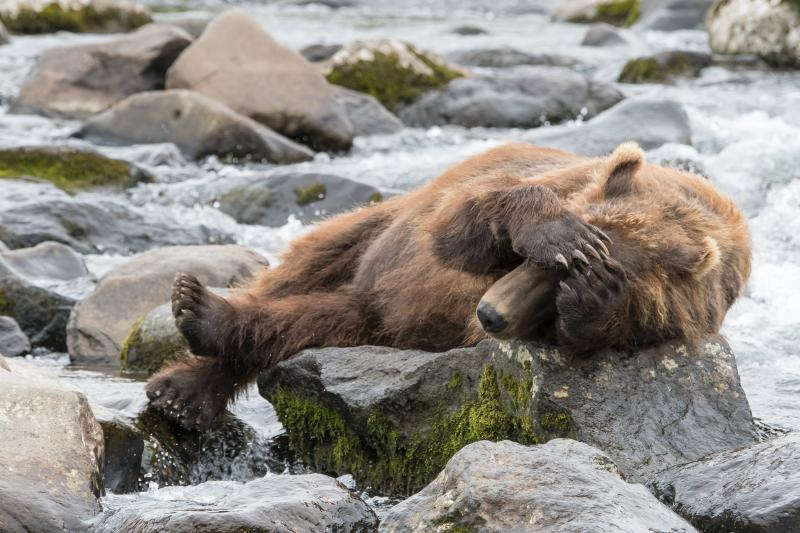 Grizzly - © Evelyne Ruoss