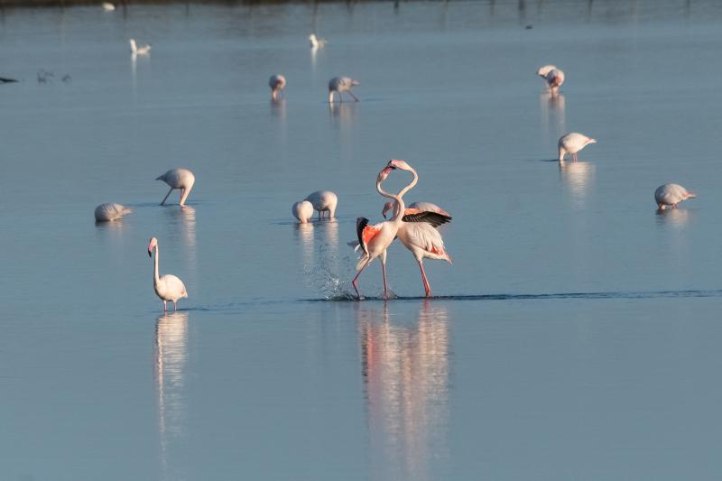 Flamant rose - © Evelyne Ruoss